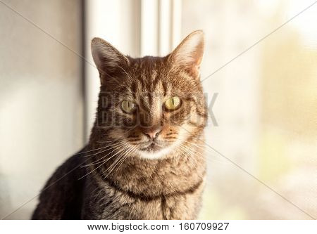 Young beautiful tabby cat at home on a window