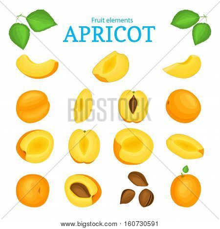 Vector set of ripe apricots fruits. Apricot fruit, whole, peeled, piece of half, slice leaves, seed. Collection of delicious orange apricot designer elements fo rpackaging of juice, breakfast