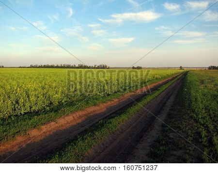 This is a country road passing through the endless fields in russian countryside. The fields are different - with canola, sunflowers, cereals and other crops.