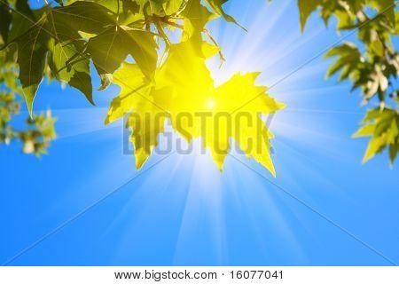 hojas verdes y el sol sobre fondo de cielo