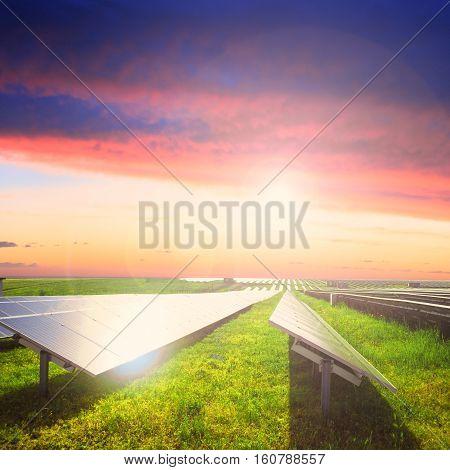 Solar panels on green field under sunset summer sky. Focus on foreground.