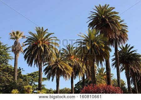 image of palm trees against a blue sky