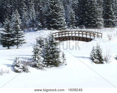 Cascade Christmas
