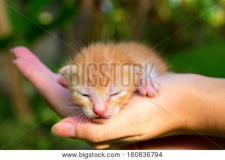 Newborn kitty in hand under sunlight. New born baby cat. Red kitty in caring hands. Cute baby cat close photo. Lovely baby pet sleeping in hands. Sweet cat closeup. Blind newborn kitten close image