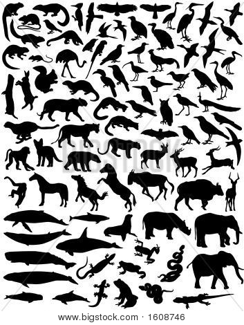 Animal Outlines