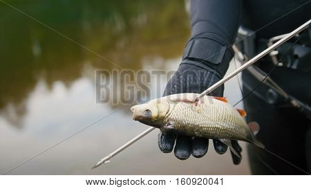 Spear fisherman shows Freshwater Fish at spear of underwater fisherman after hunting in forest river, close up
