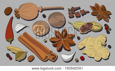 Spices, condiments and herbs decorative elements. Vector illustration, EPS 10