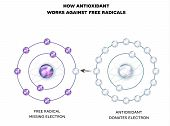 How Antioxidant Works Against Free Radicals. Antioxidant Donates Missing Electron To Free Radical, N poster