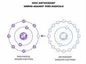 How Antioxidant Works Against Free Radicals. Antioxidant Donates Missing Electron To Free Radical, N poster