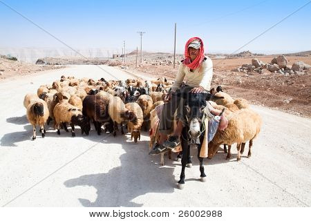 KARAK, JORDAN - SEPTEMBER 23: A shepherd on a donkey leads his sheep down a road to pasture,  September 23, 2010 in Karak, Jordan
