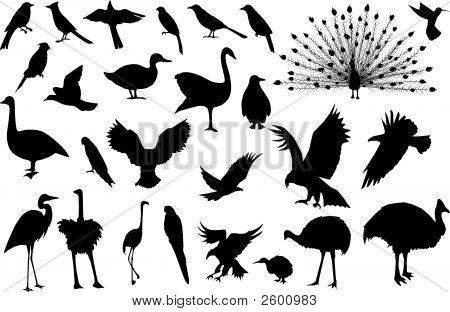 Bird_Silhouettes