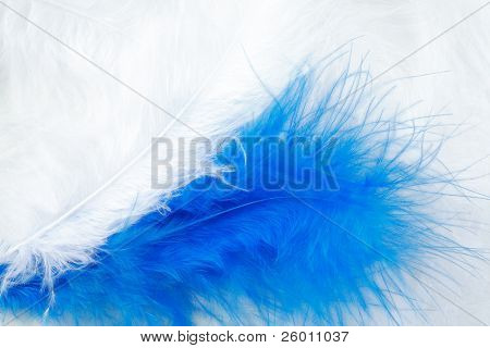 White and blue feather background