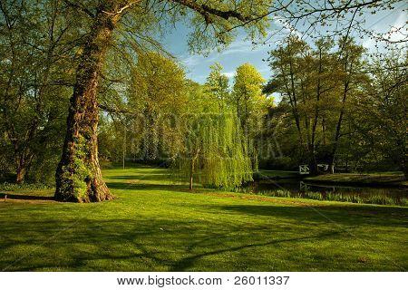 Green scenery in park with small lake