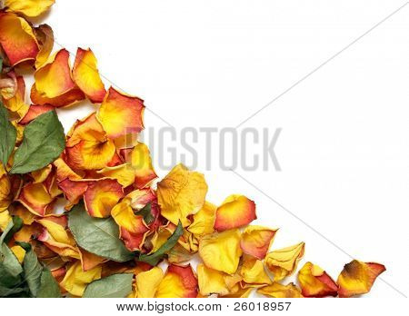 Background with colorful wilted rose petals