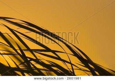 Sunrise Reeds Img_4883