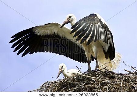 Storch, die weg fliegt