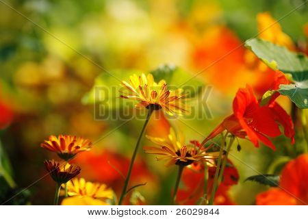Bright flowers in garden in sunny day, with copy space above, selective focus