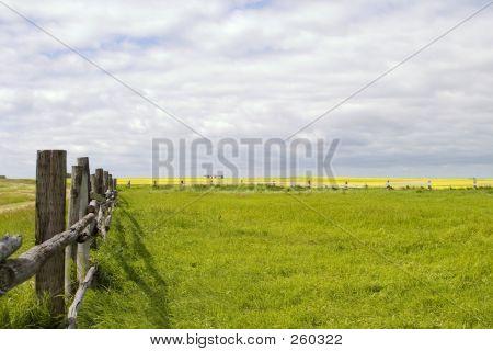 Prairie Landscape - Fence Line