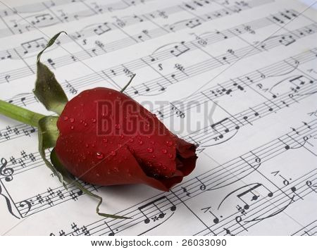 Red rose on notesheet