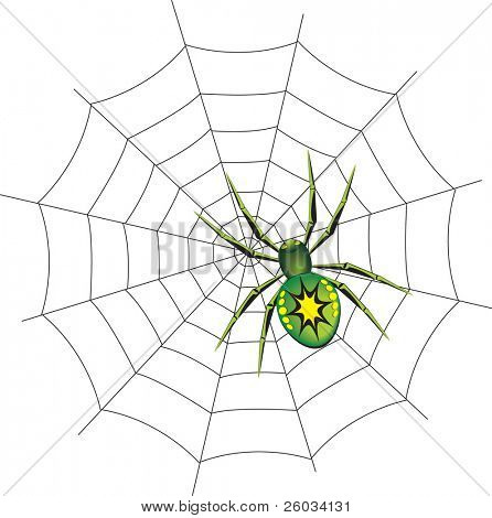 Spider on a web. Vector illustration