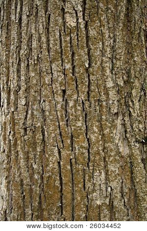 Texture of tree bark, vertical format