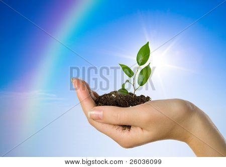 Mano con una planta en un fondo de cielo azul y un arco iris