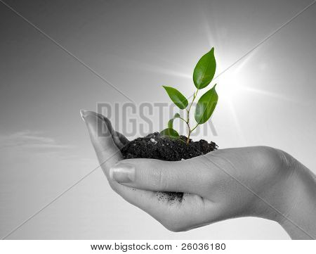 Mano con una planta en un fondo de cielo azul. Fondo en blanco y negro y verde planta
