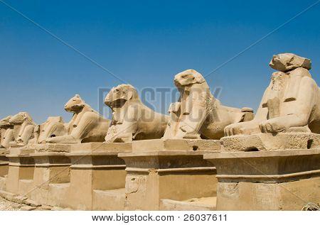 Schafe in Karnak-Tempel, Luxor (Ägypten)