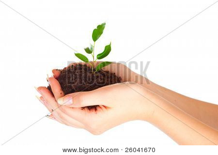Plant in two hands. Isolated on white background