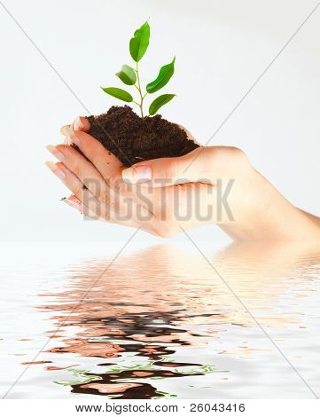 Plant in two hands on gray background