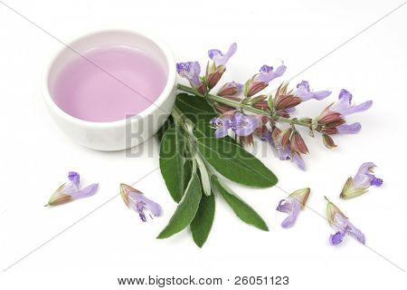Extract of sage plant (lat. Salvia Officinalis) used for aromatherapy