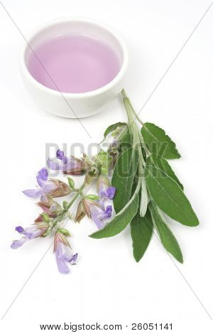 Sage plant and essential oil used for aromatherapy