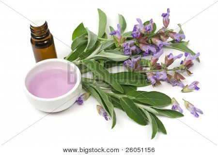 Sage plant and essential oil isolated on white