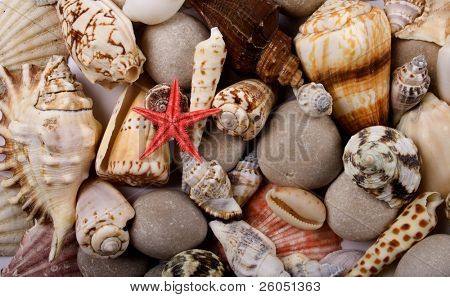 Small red starfish with shellfish and stones as background