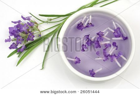 Lavender plant and extract isolated on white background