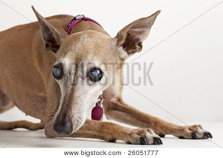 Old Blind Dog