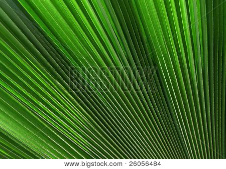 \ palm tree leaf