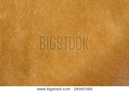 soft leather texture