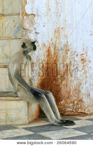 Monkey sapiens...