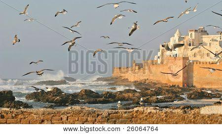 Seagulls above fortress in Essaouira