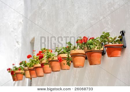 Row of flowerpots on the white wall