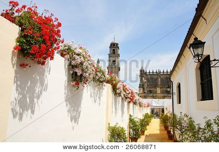 Trees and flowers on the white streets of Andalucia, Spain