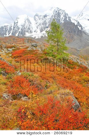 Mountain peak and larch at foreground
