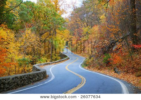 Winding road in Autumn woods with colorful foliage tree in rural area.