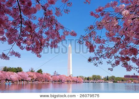 Washington DC cherry blossom with lake and Washington Monument.
