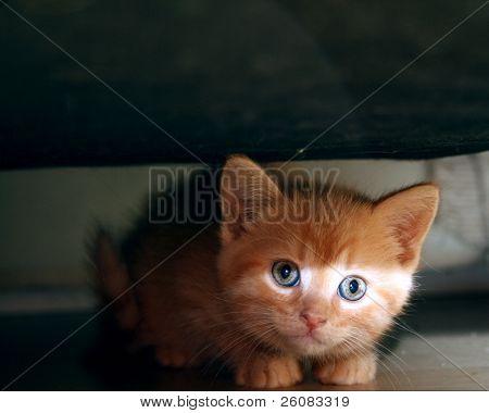 Kitty bandit caught hiding