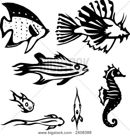 Reef_Fish