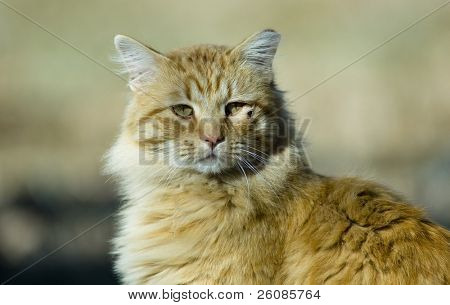 verletzt orange Katze im freien