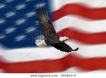 Águila calva volando frente a la bandera americana