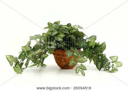 Artificial houseplant with painted styrofoam pot.  Shot on white.